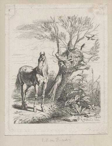 das Pferd beim Baum